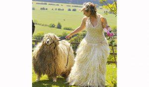 bulu domba